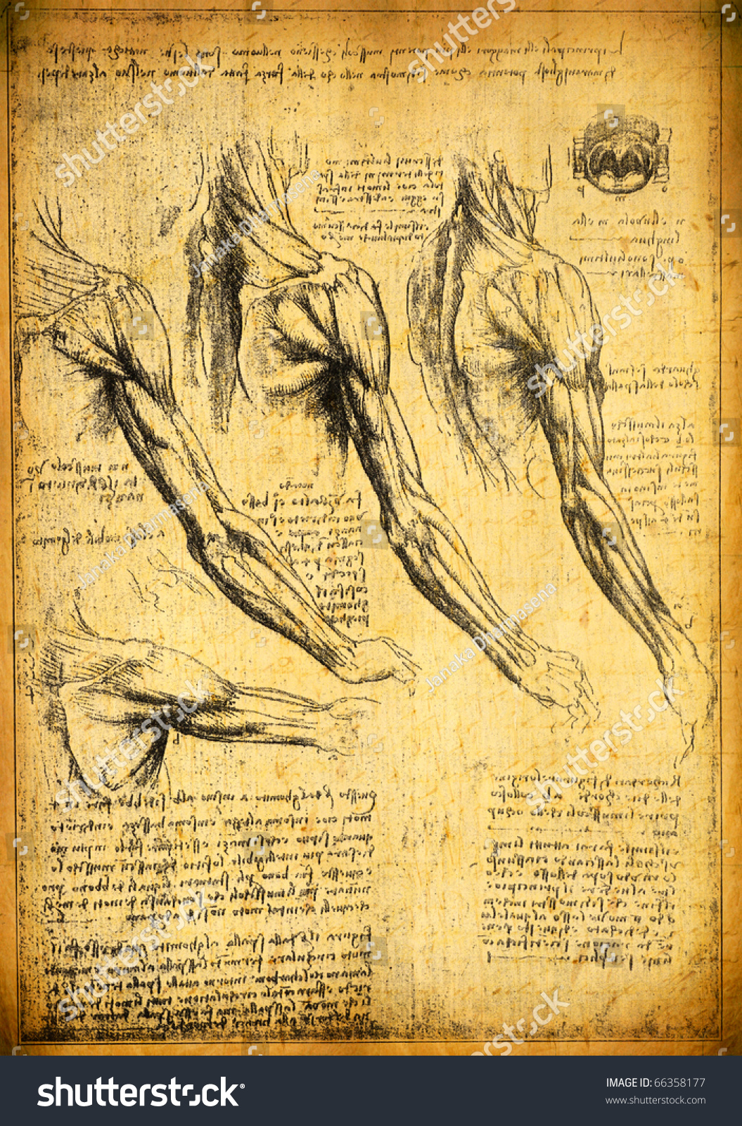 Anatomy Art By Leonardo Da Vinci Stock Illustration 66358177 ...