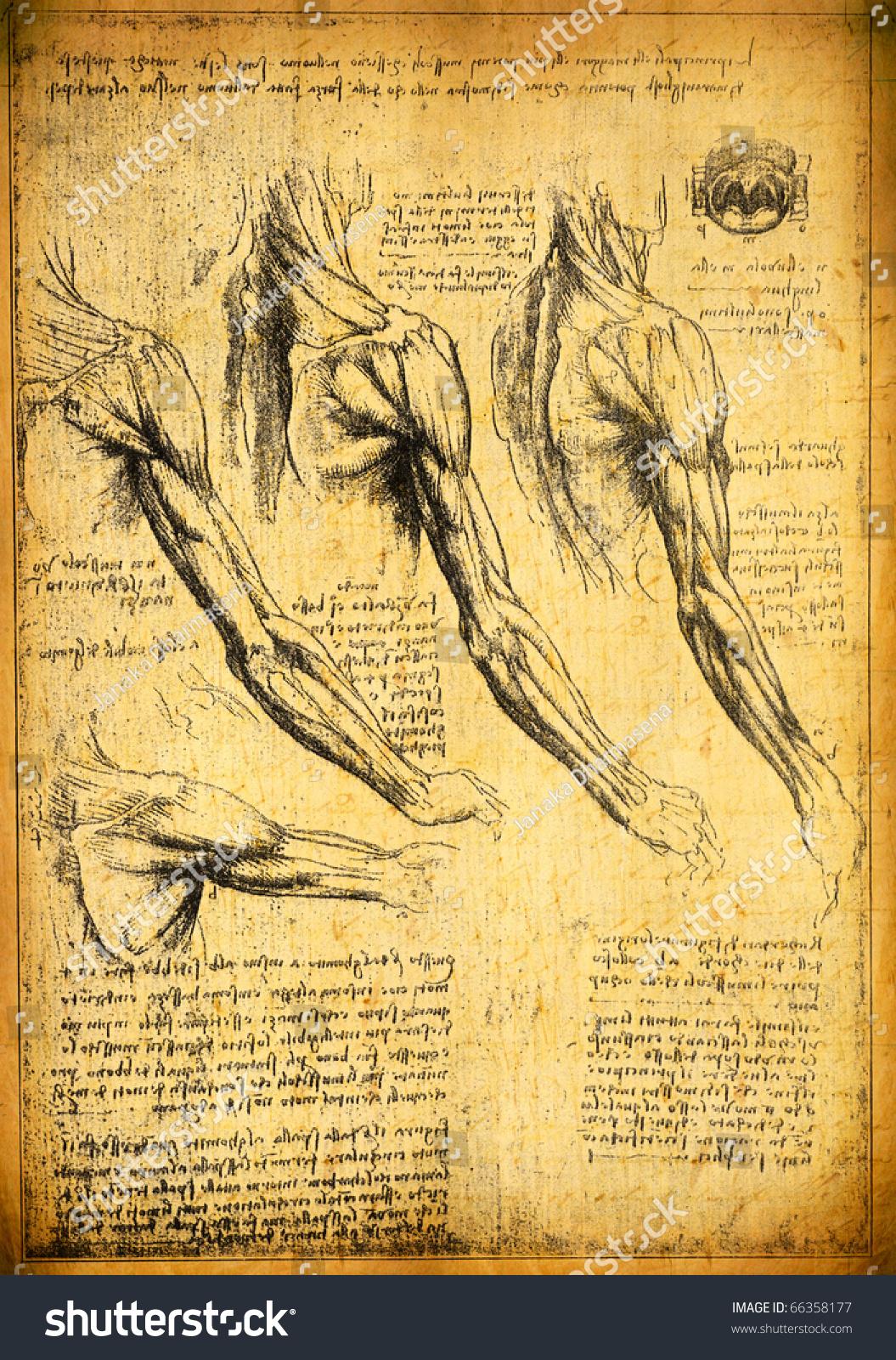 Anatomy Art By Leonardo Da Vinci Stock Illustration 66358177 ...