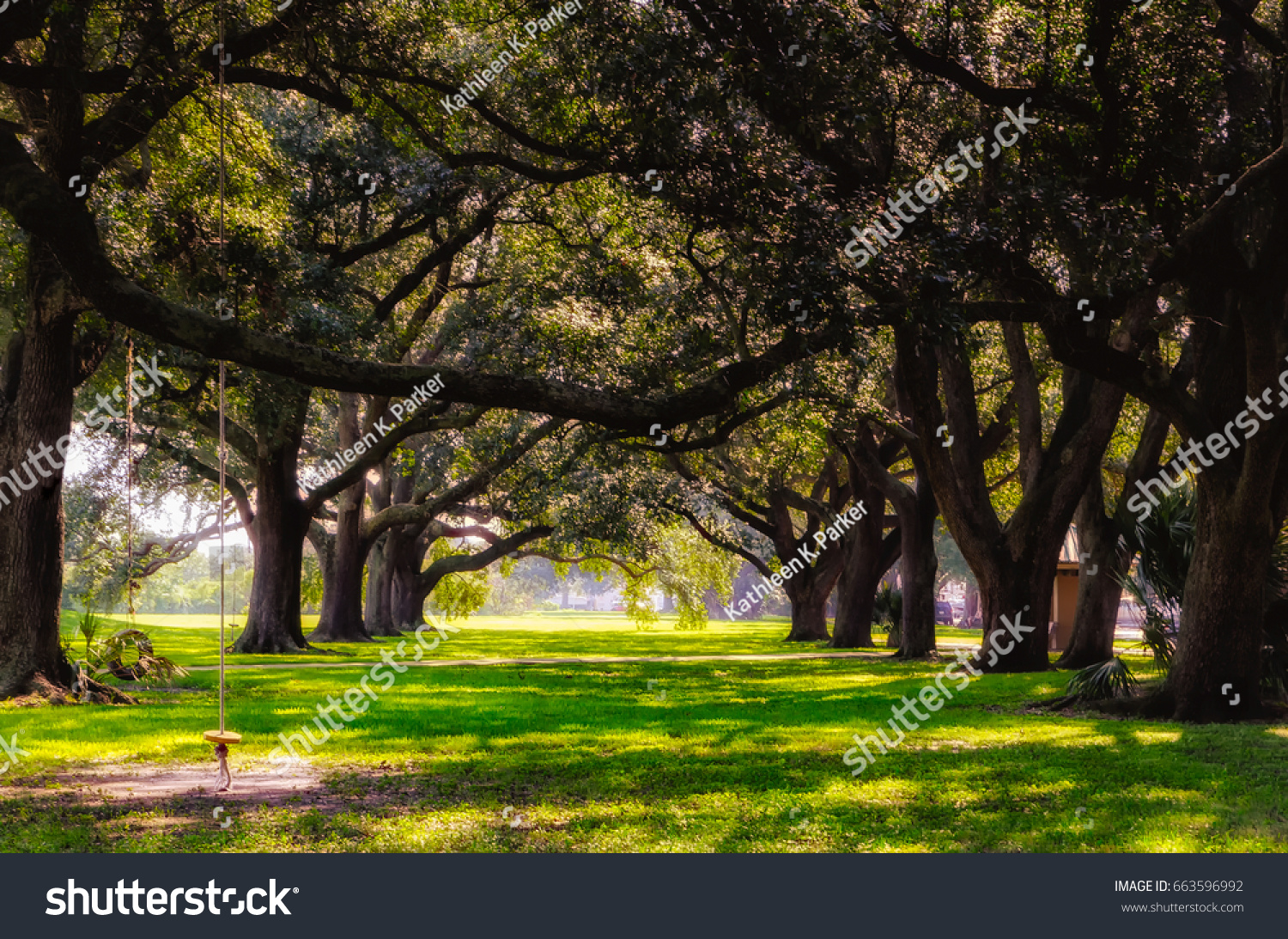 Live Oak Tree Tunnel New Orleans Stock Photo (Royalty Free ...