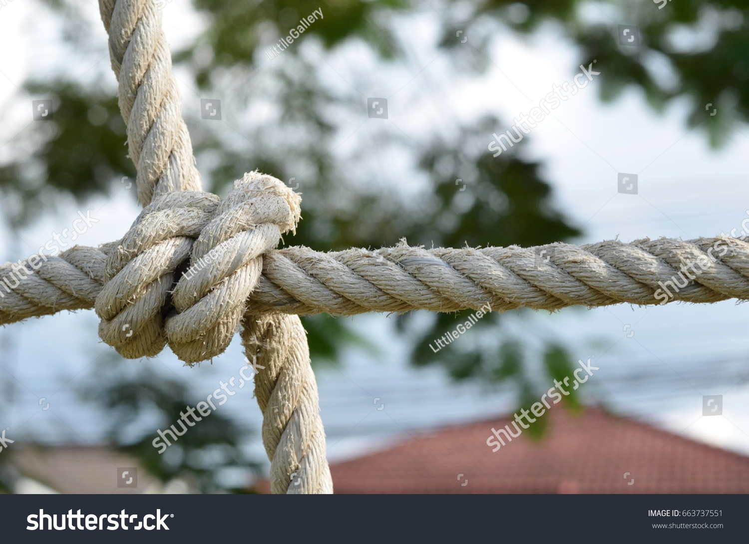 Rope knot line tied together nature stock photo 663737551 rope knot line tied together with nature backgroundas a symbol for trust teamwork or biocorpaavc Choice Image