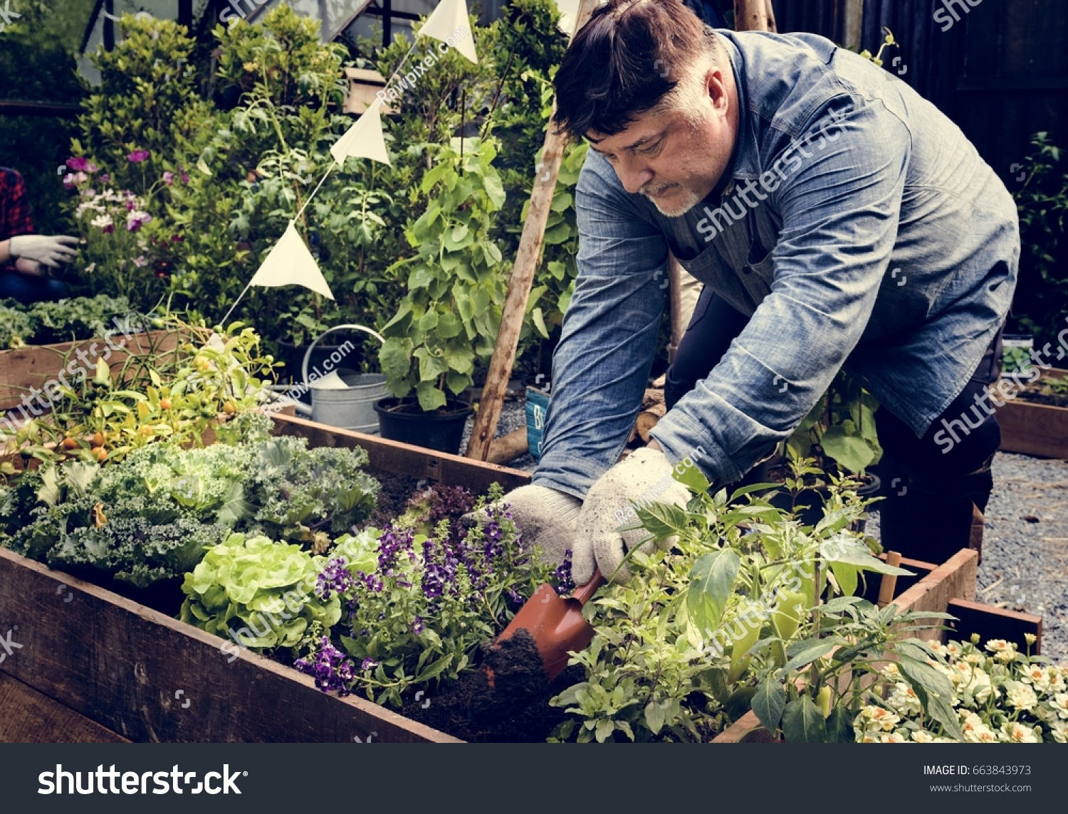Planting A Backyard Garden senior adult planting vegetable backyard garden stock photo (edit