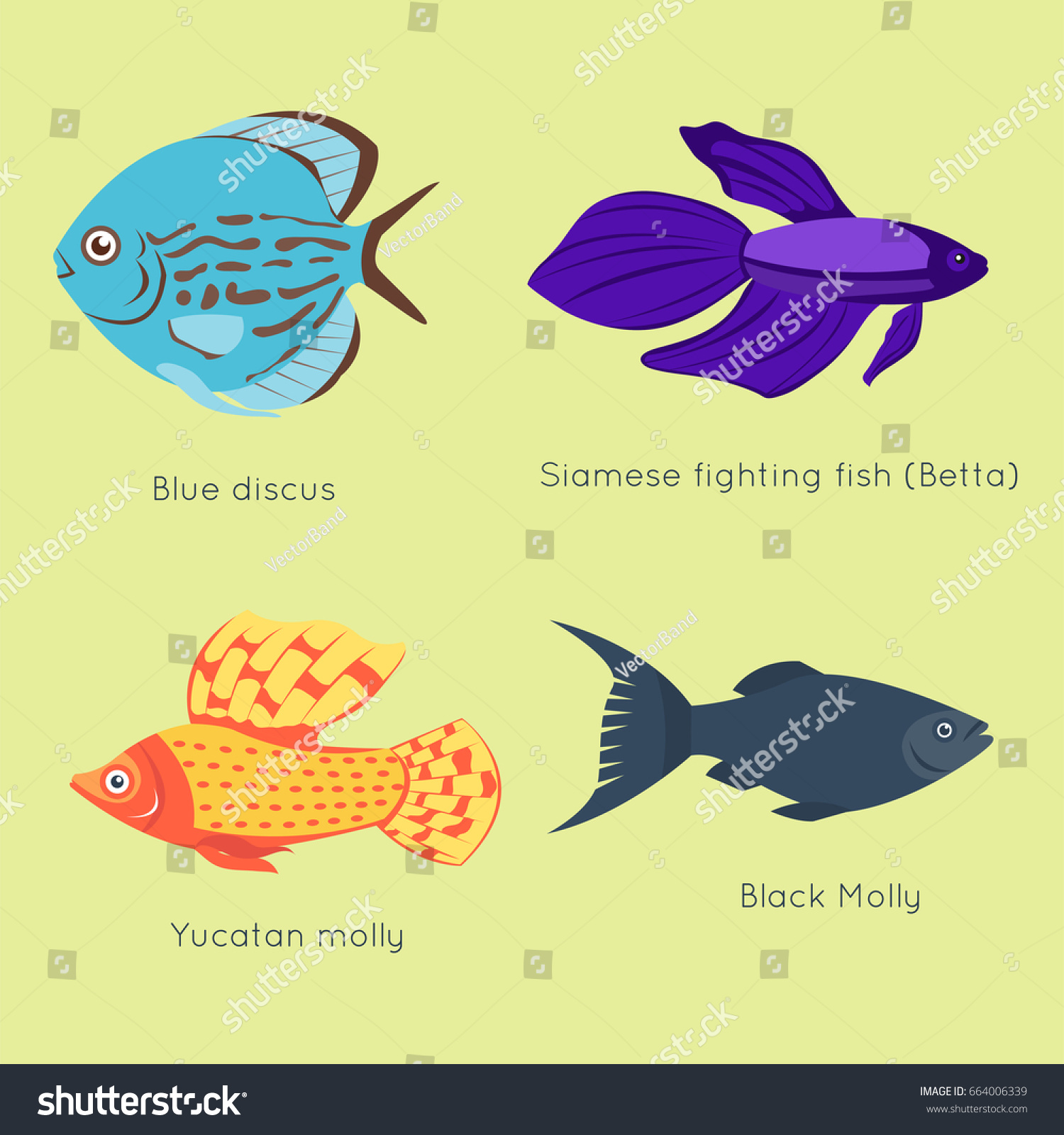Exotic tropical fish different colors underwater stock vector exotic tropical fish different colors underwater ocean species aquatic nature flat isolated vector illustration jeuxipadfo Images