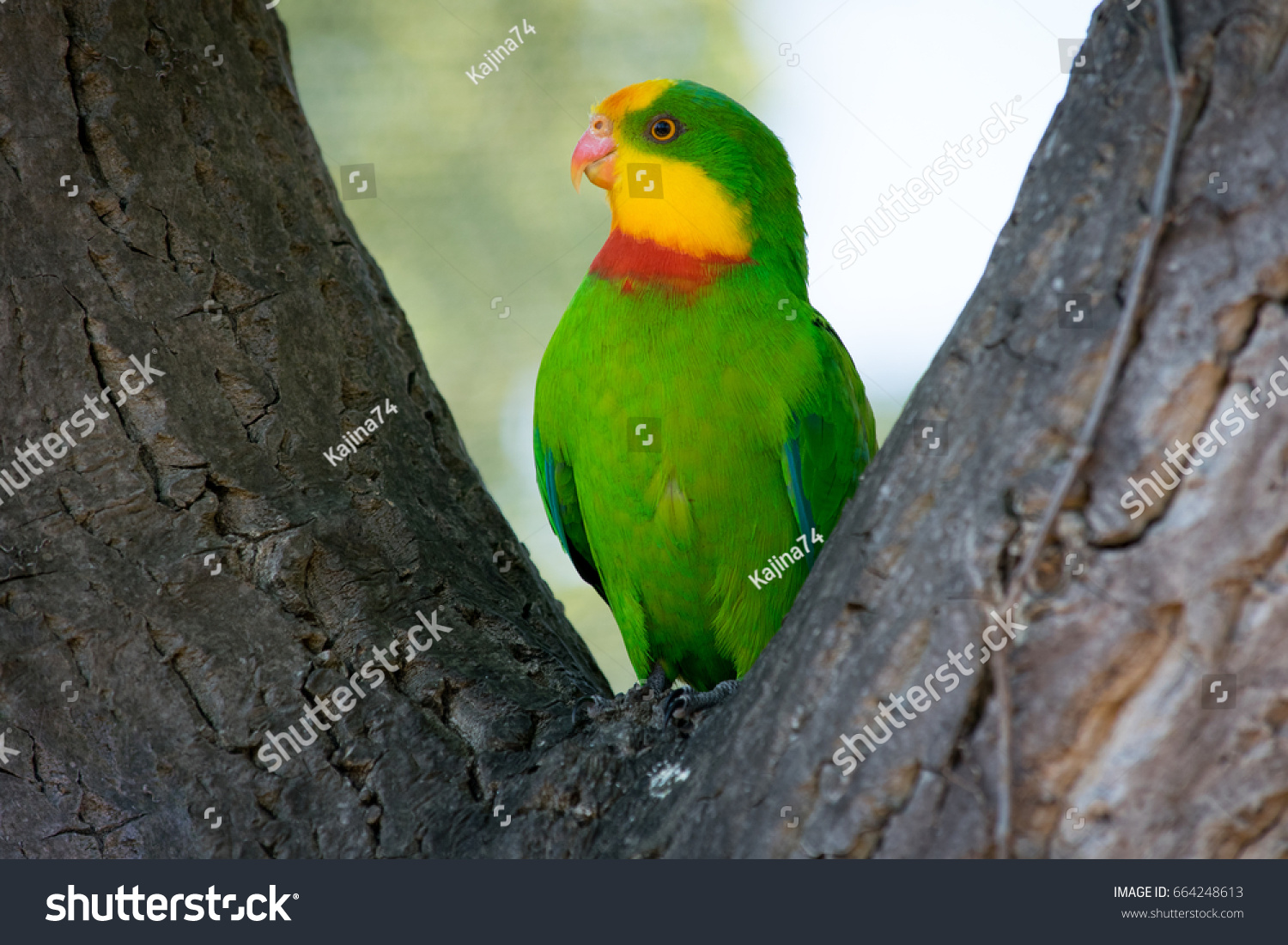 close green parrot yellow head red stock photo edit now 664248613
