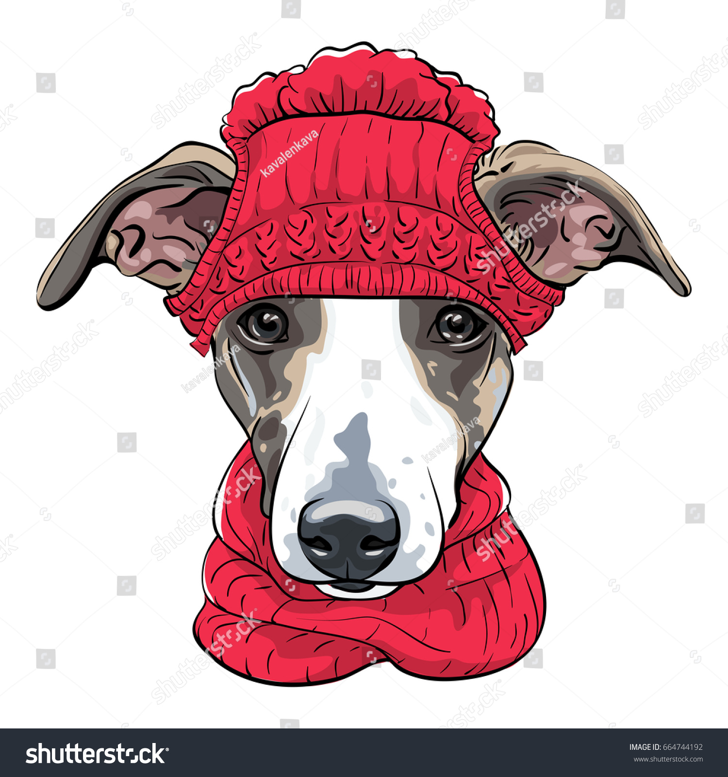 Dog breed italian greyhound warm winter stock vector 664744192 dog breed italian greyhound in warm winter red knitted hat and scarf isolated on the white bankloansurffo Images