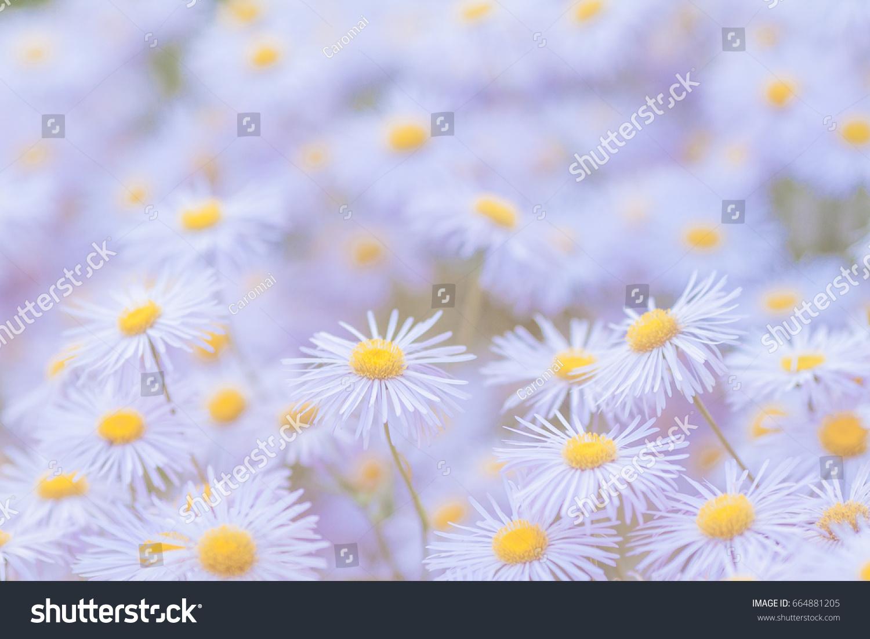 Blurry Light Purple Flowers Background Stock Photo Edit Now