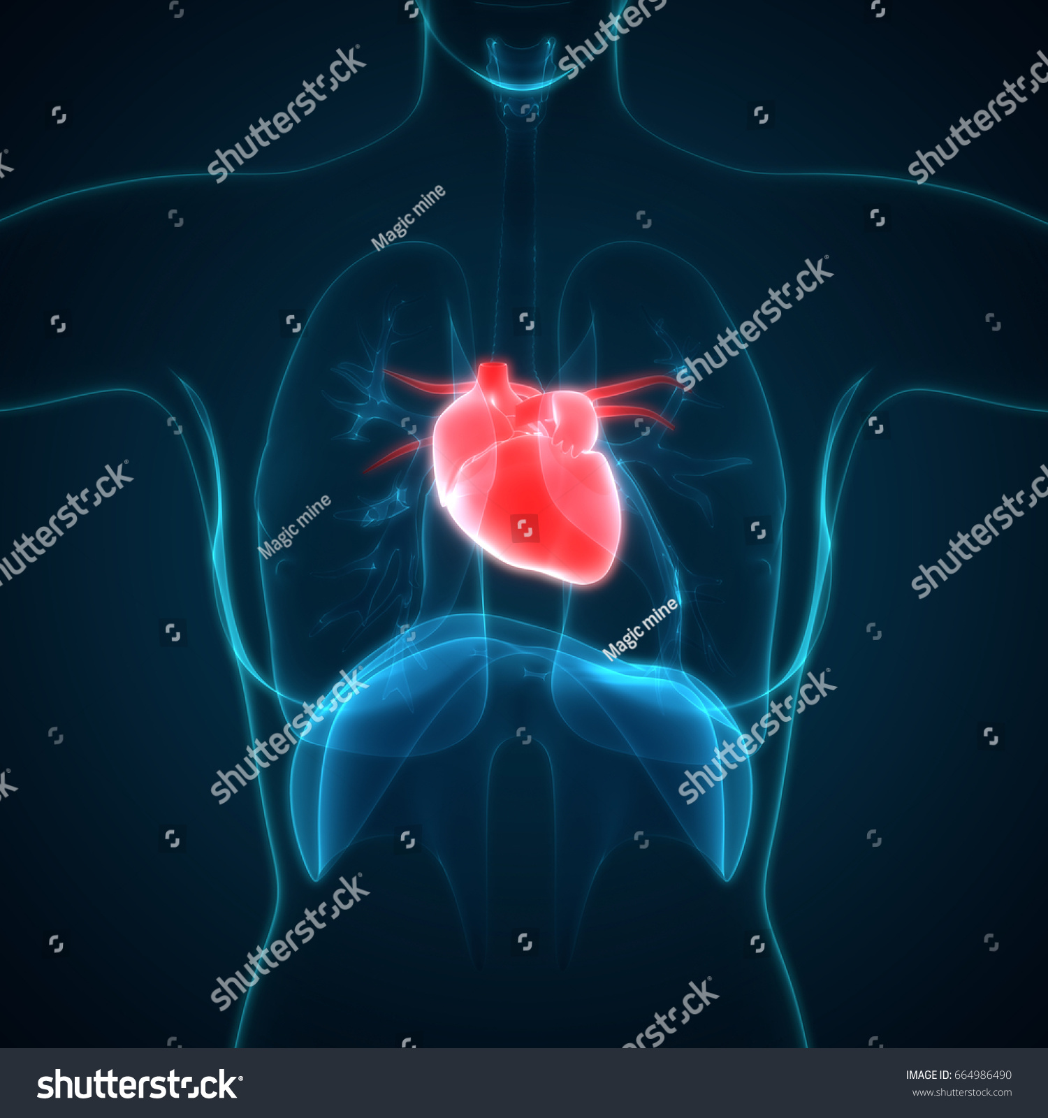 Human Body Organs Heart Anatomy 3 D Stock Illustration 664986490 ...