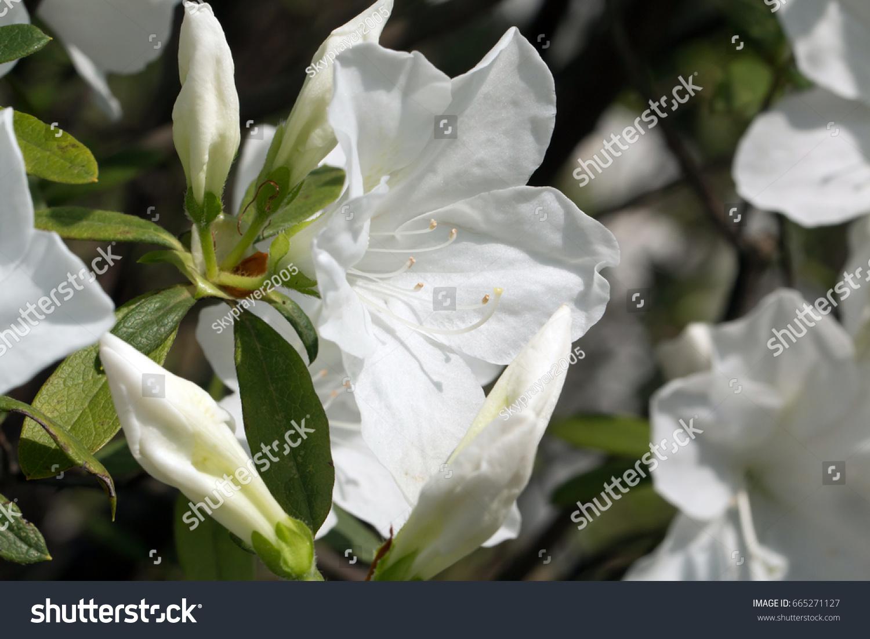 Spring Garden Flowers Ez Canvas