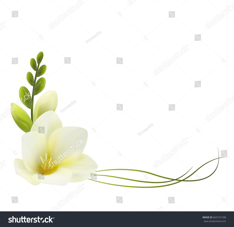 Realistic White Freesia Corner Symbol Love Stock Vector Royalty