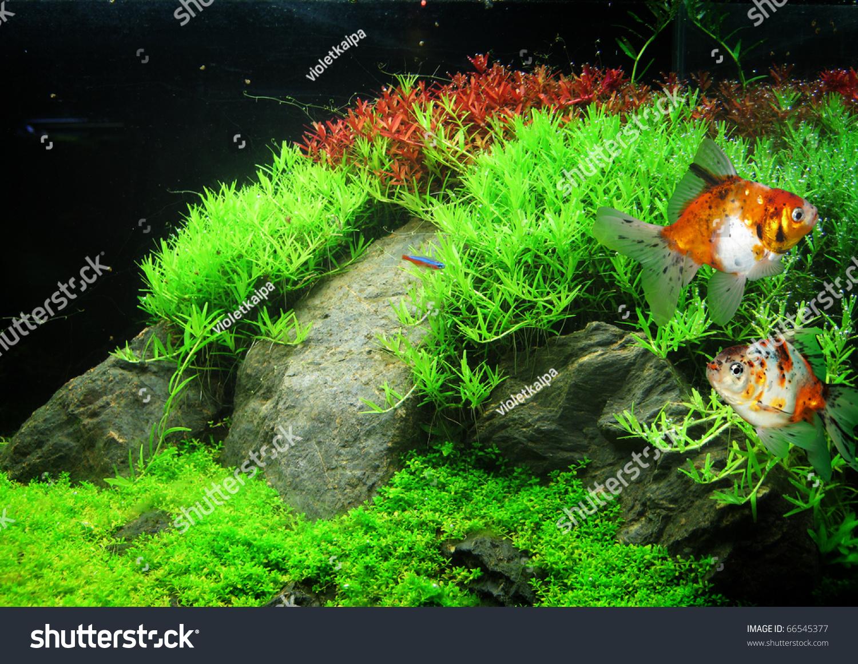 Beautiful Small Fish Tanks Home Design Architecture