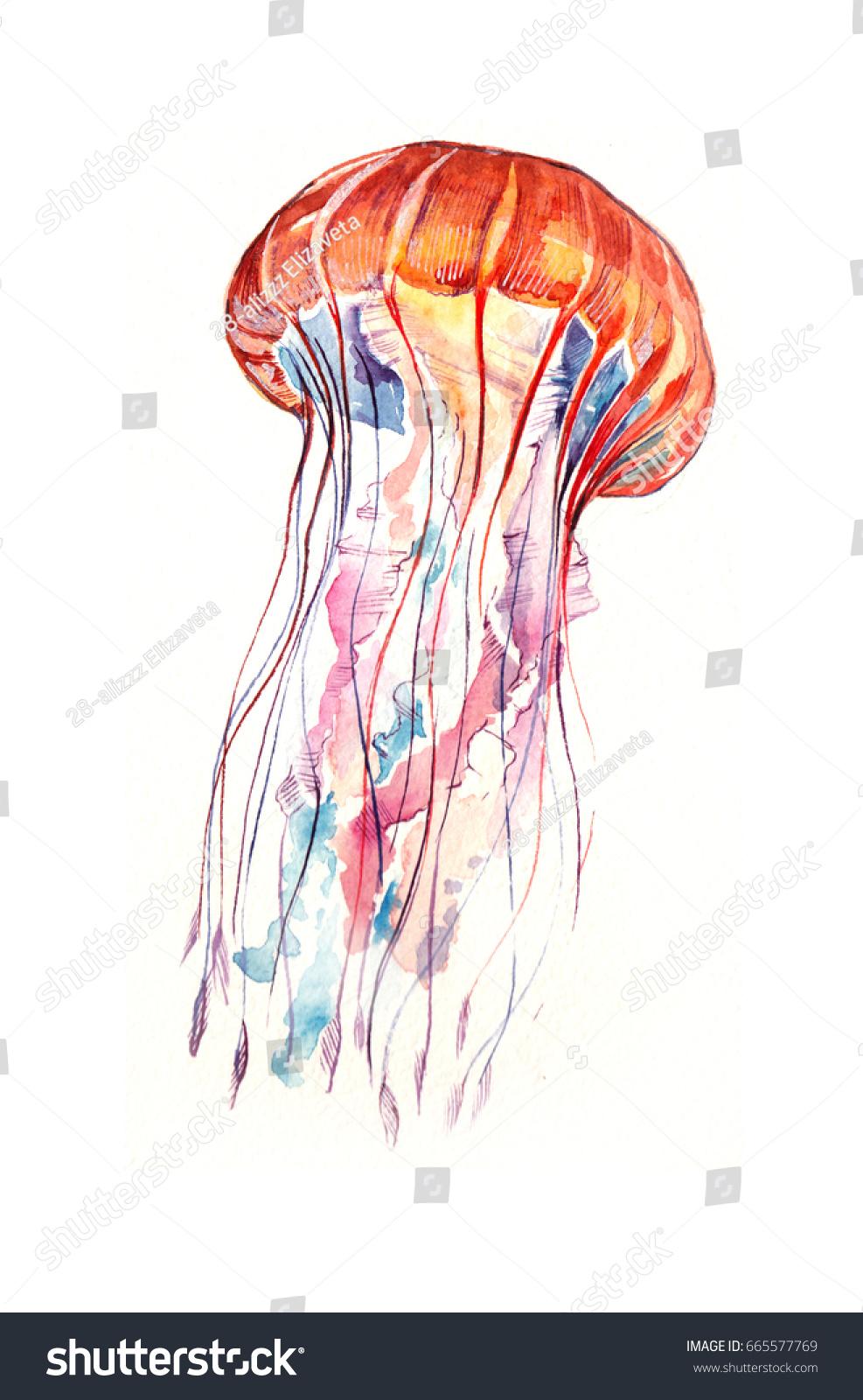 Jellyfish Watercolor Stock Illustration 665577769 - Shutterstock