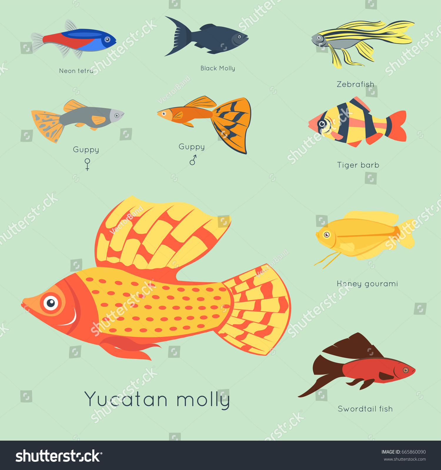 Exotic Tropical Fish Different Colors Underwater Stock Photo (Photo ...