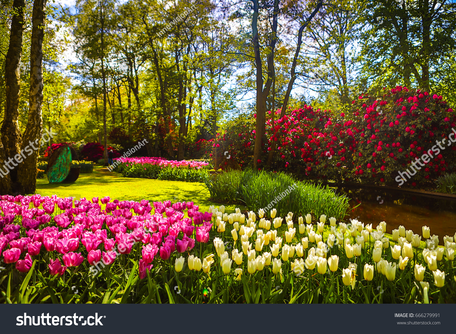 Blooming Summer Garden Beautiful Flowers Park Stock Photo Edit Now