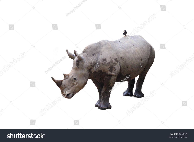 tick bird and rhinoceros relationship problems