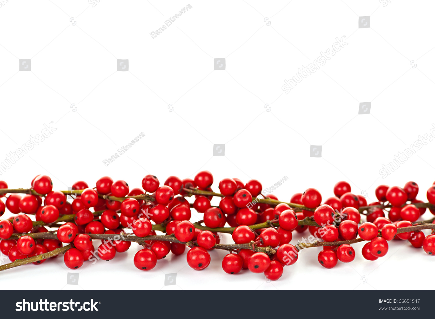 Red winterberry christmas border with holly berries on branches stock
