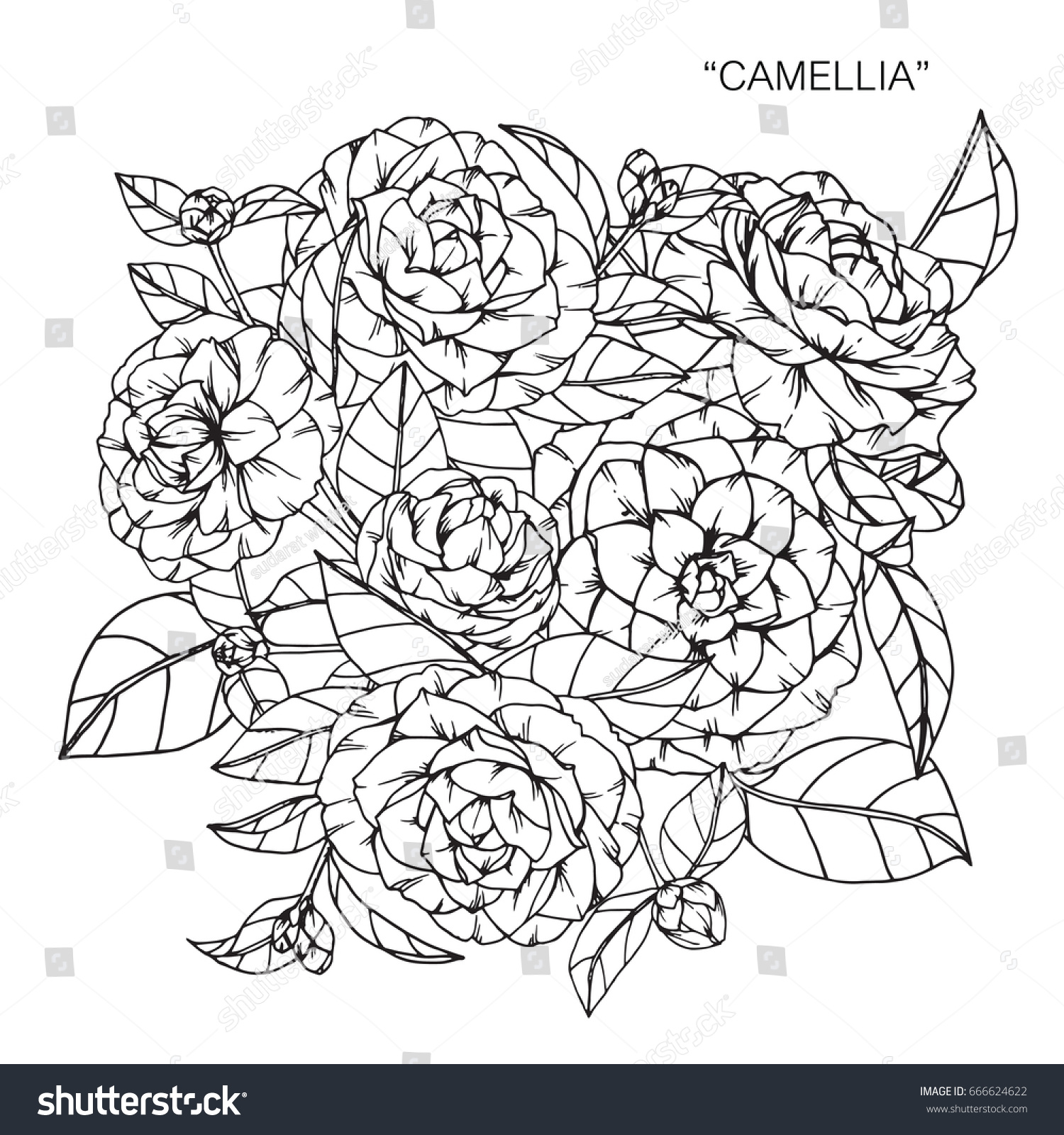 Bouquet of peony flowers drawing and sketch with line art on white bouquet of peony flowers drawing and sketch with line art on white backgrounds ez canvas izmirmasajfo