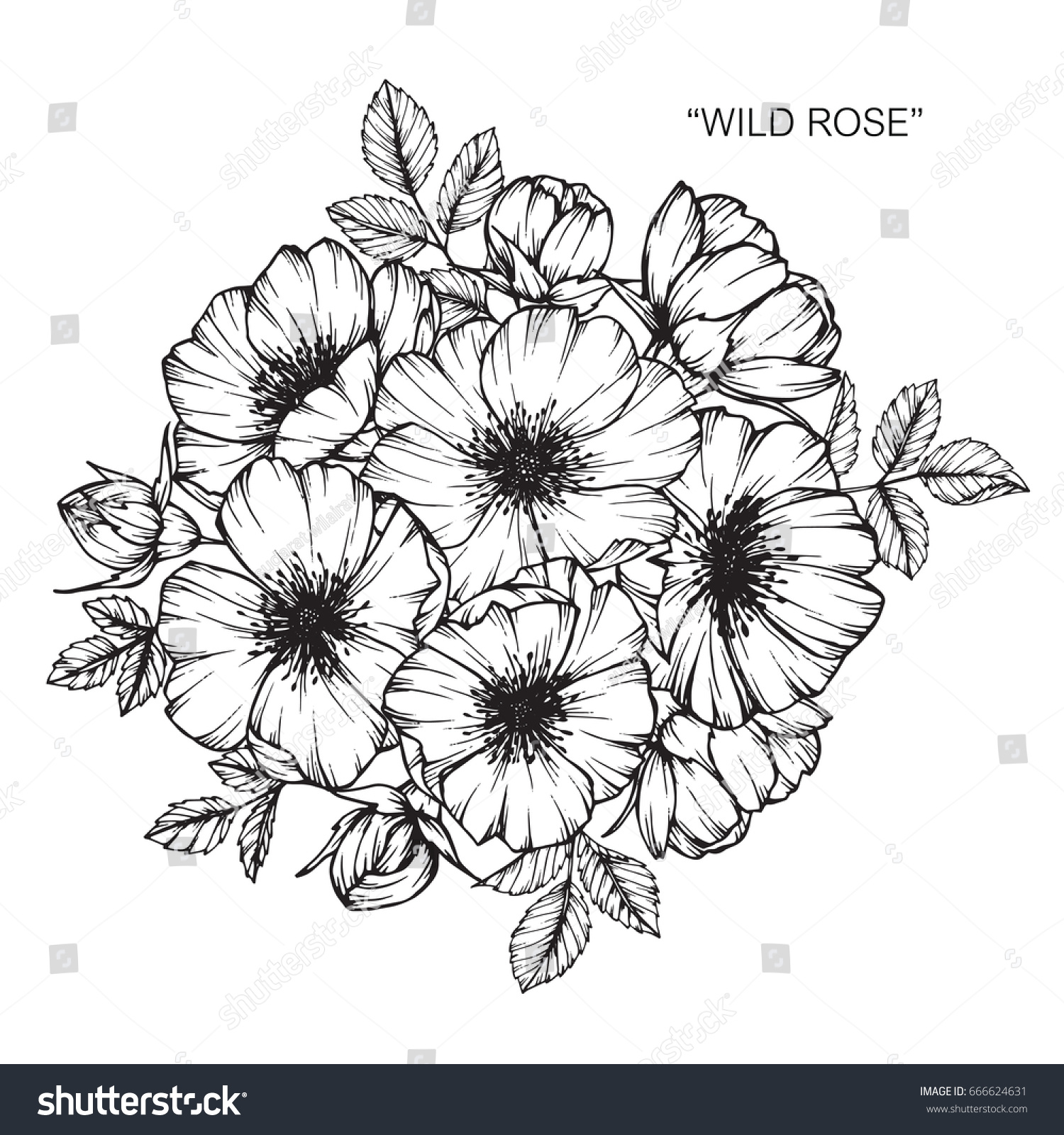 Bouquet Roses Flowers Drawing Sketch Lineart Stock Vector Royalty Free 666624631