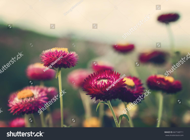 Beautiful Flowers Bouquet Retro Floral Vintage Stock Photo Edit Now 667168711