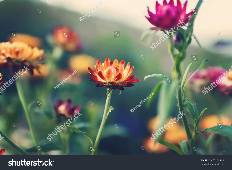 Beautiful Flowers Bouquet Retro Floral Vintage Stock Photo Edit Now 667168744