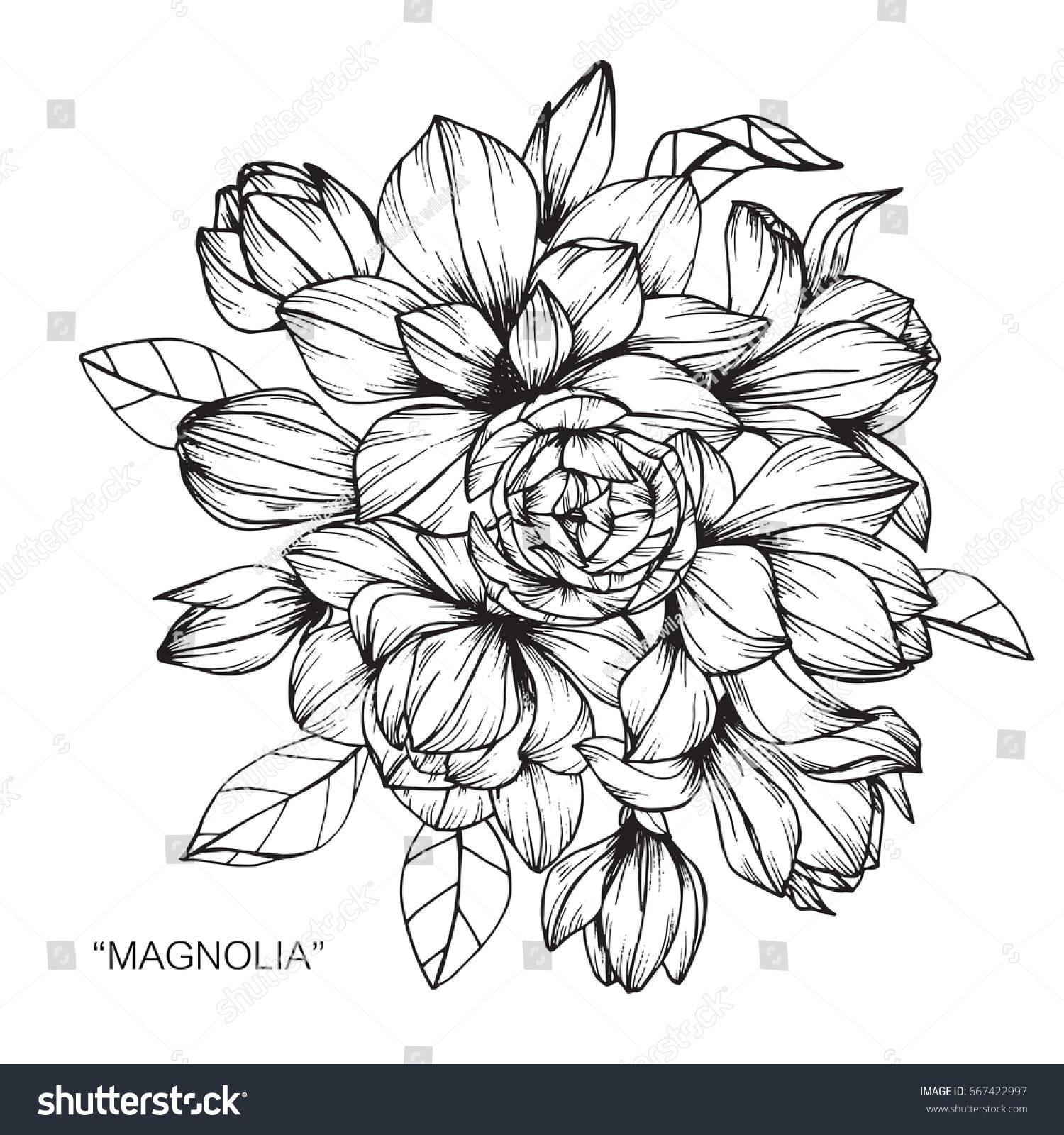 Bouquet Magnolia Flowers Drawing Sketch Lineart Stock Vector