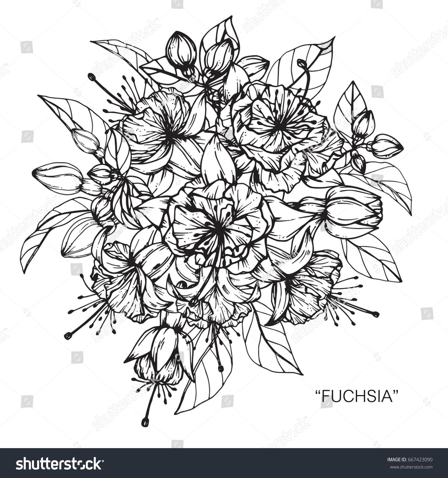 Flower Bouquet Line Drawing : Bouquet fuchsia flowers drawing sketch lineart stock