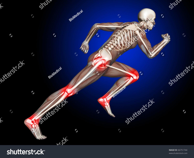3 D Skeleton Running Leg Hip Joints Stock Illustration 66751744