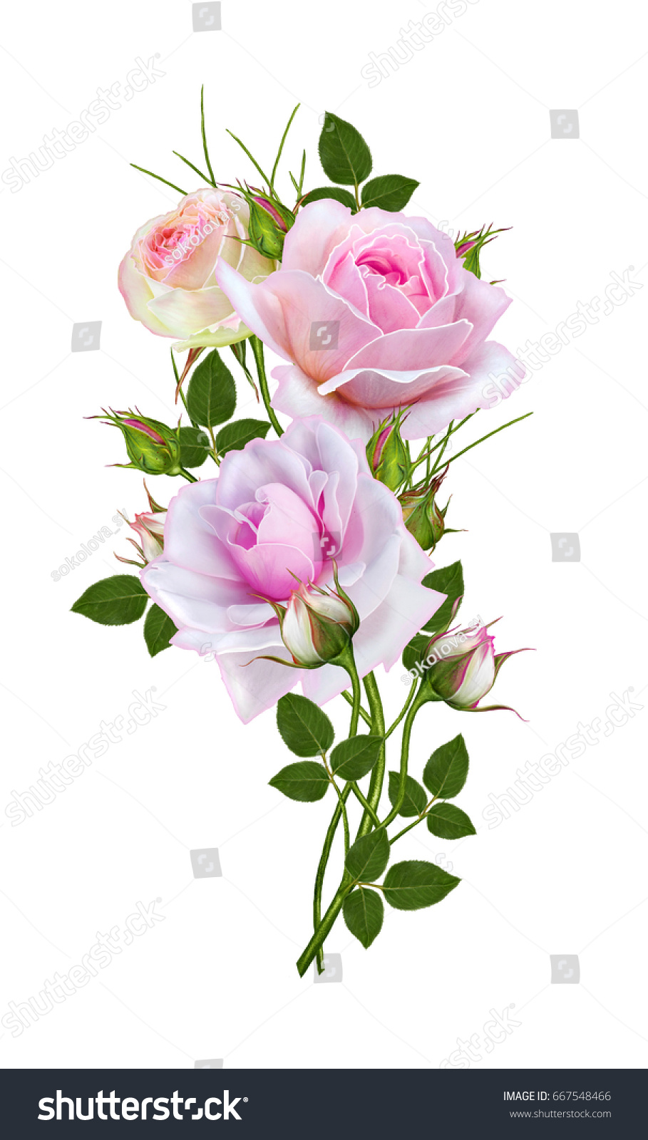 Flower Arrangement Delicate Pink Roses Beautiful Stock Illustration