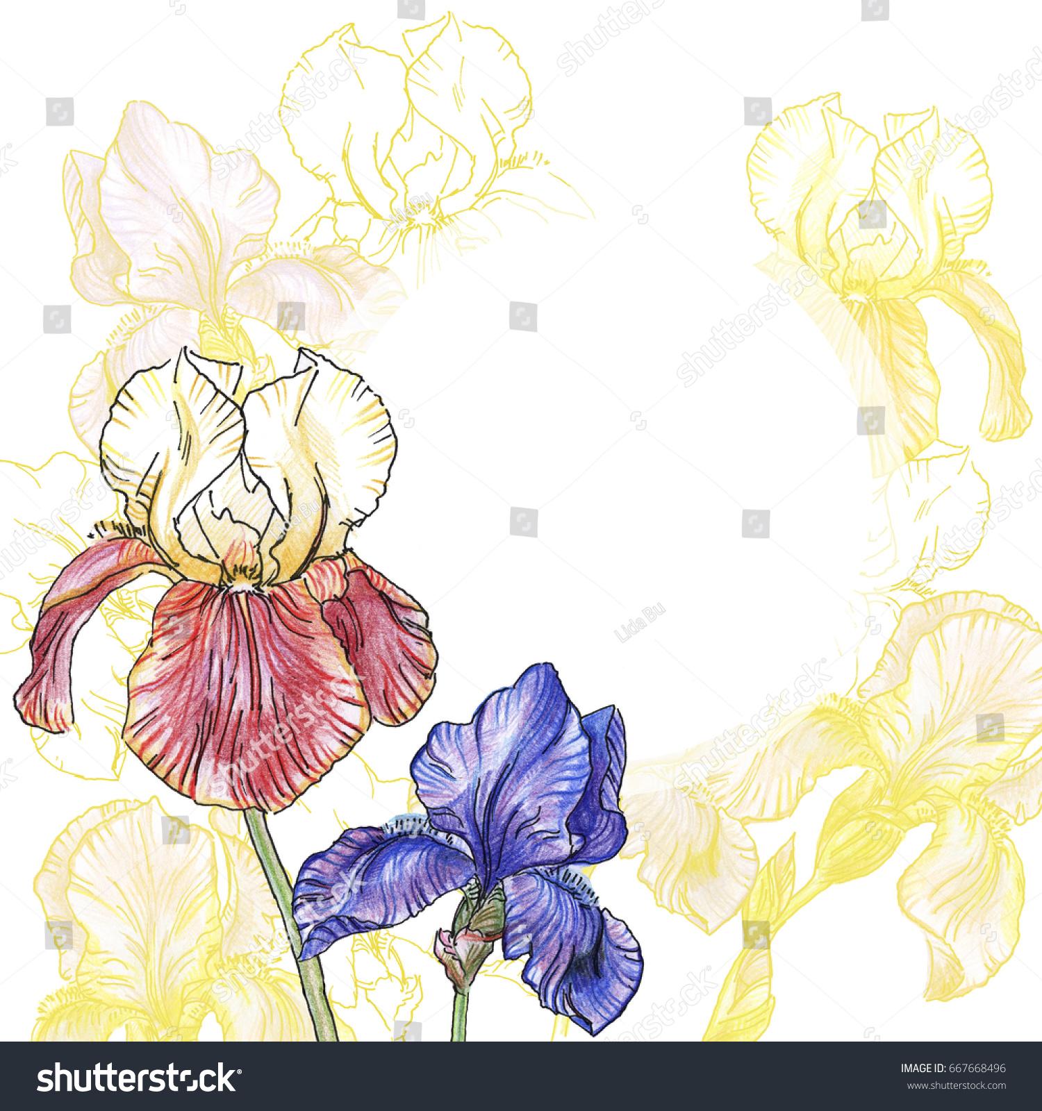 Bouquet Irises Flowers On White Background Stock Illustration