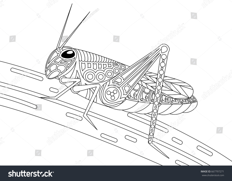 Monochrome Grasshopper Coloring Page Black Over Stock Vector