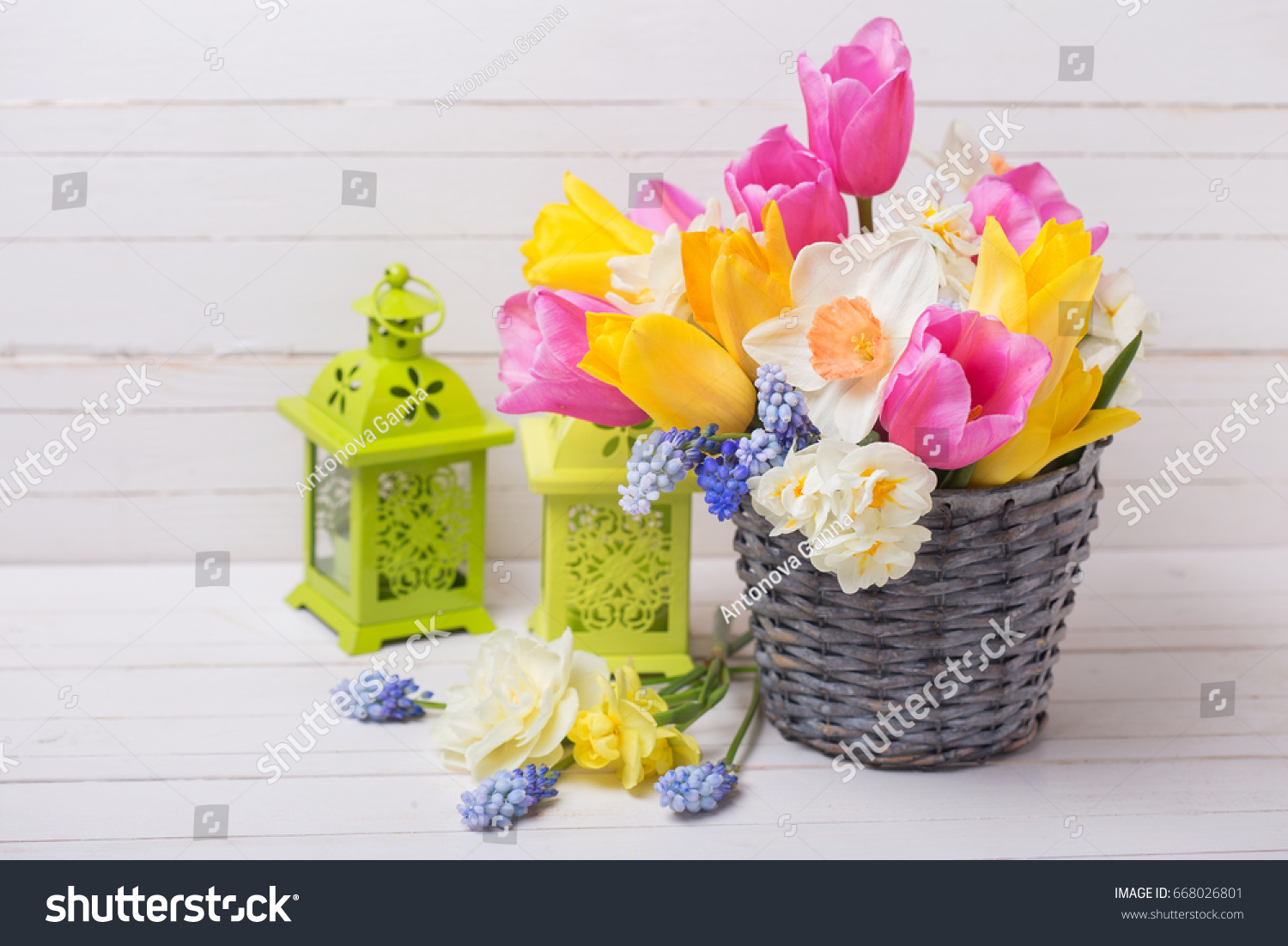Pink Yellow And White Spring Tulips And Daffodils Flowers In Grey