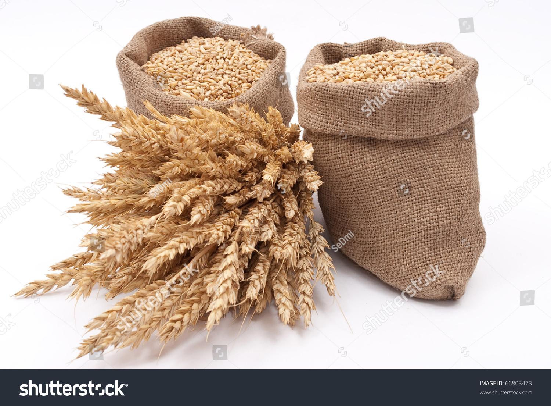 Sacks Of Wheat Grains Stock Photo 66803473 : Shutterstock