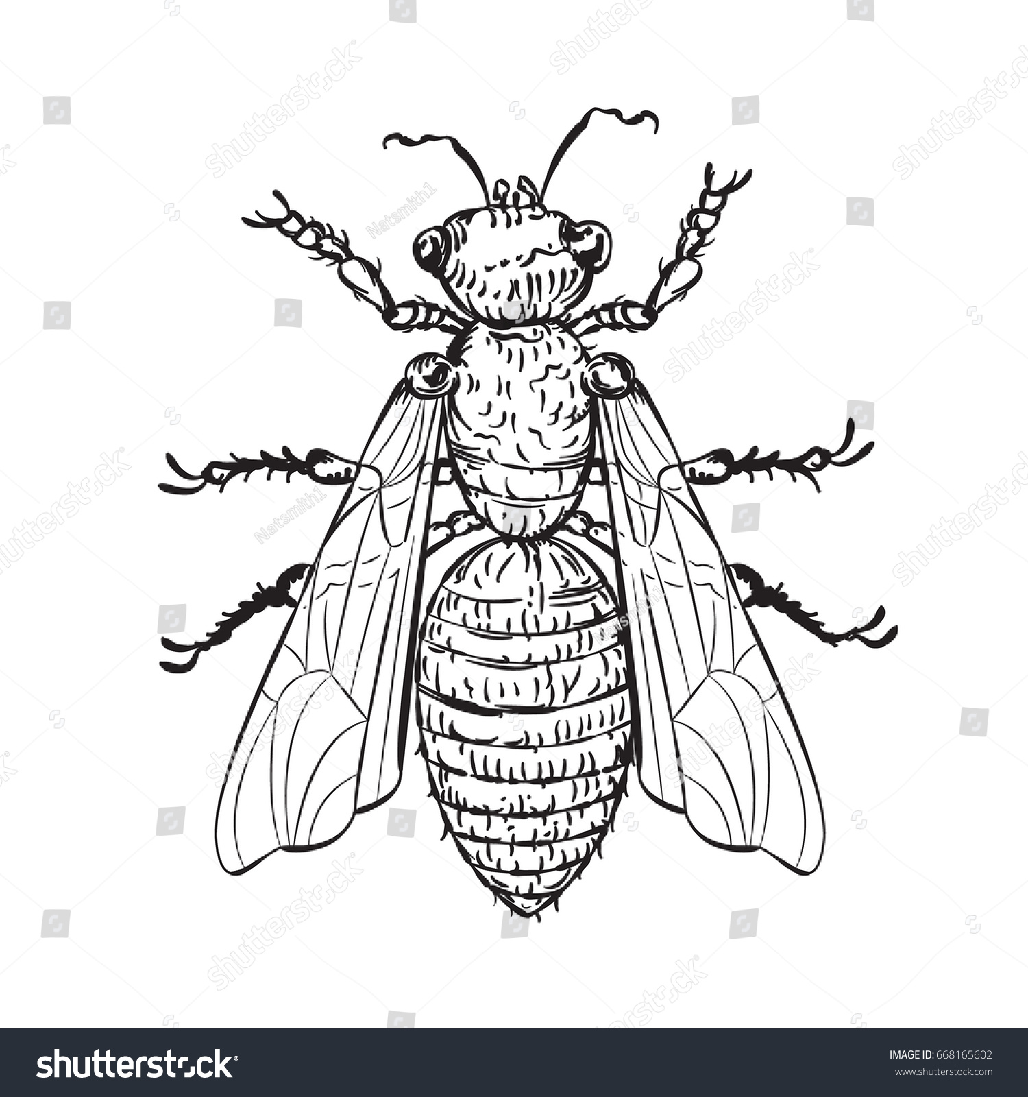 Line Drawing Editor : Vector drawing house fly line art stock