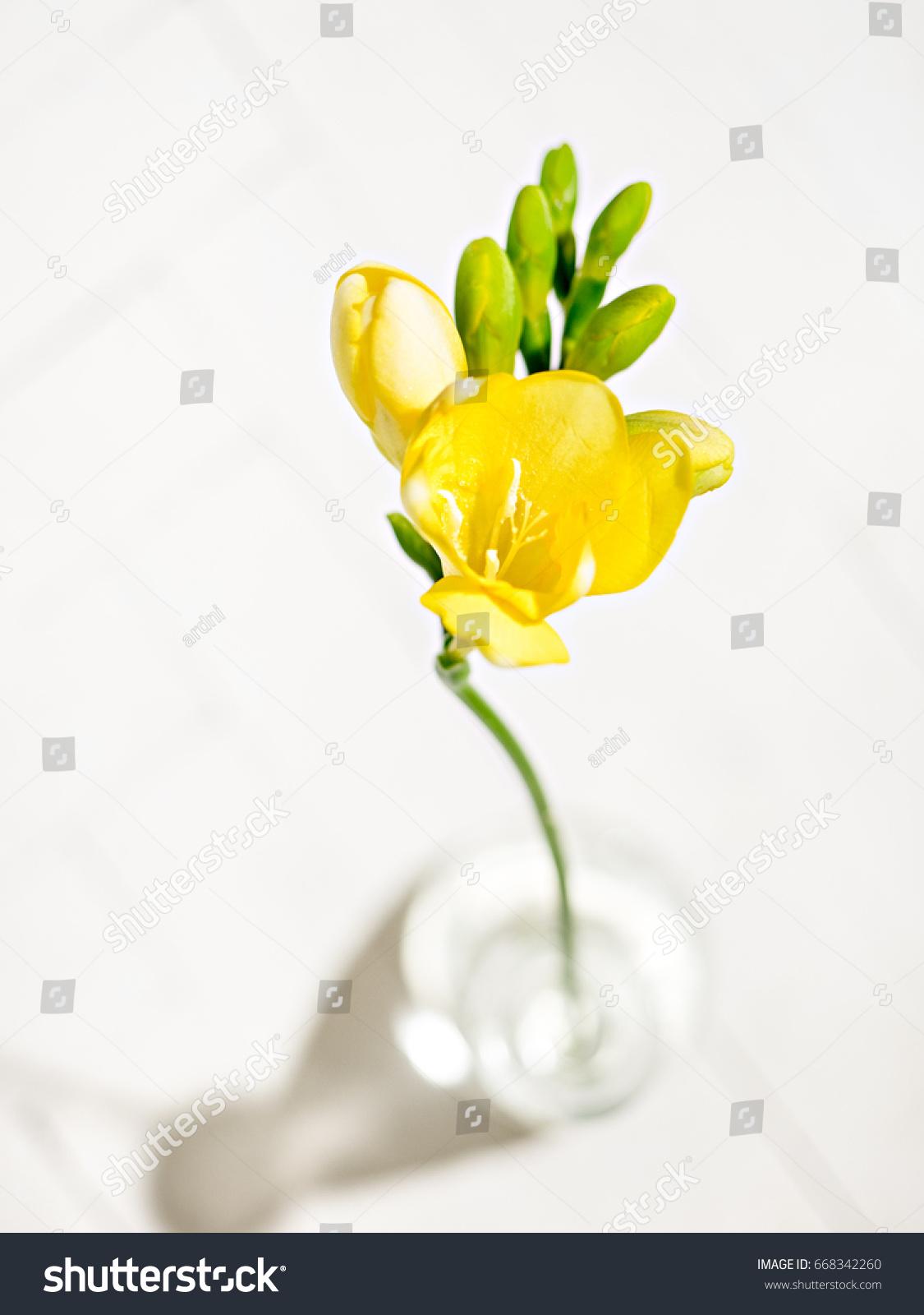 Yellow Freesia Flower Vase Stock Photo Royalty Free 668342260