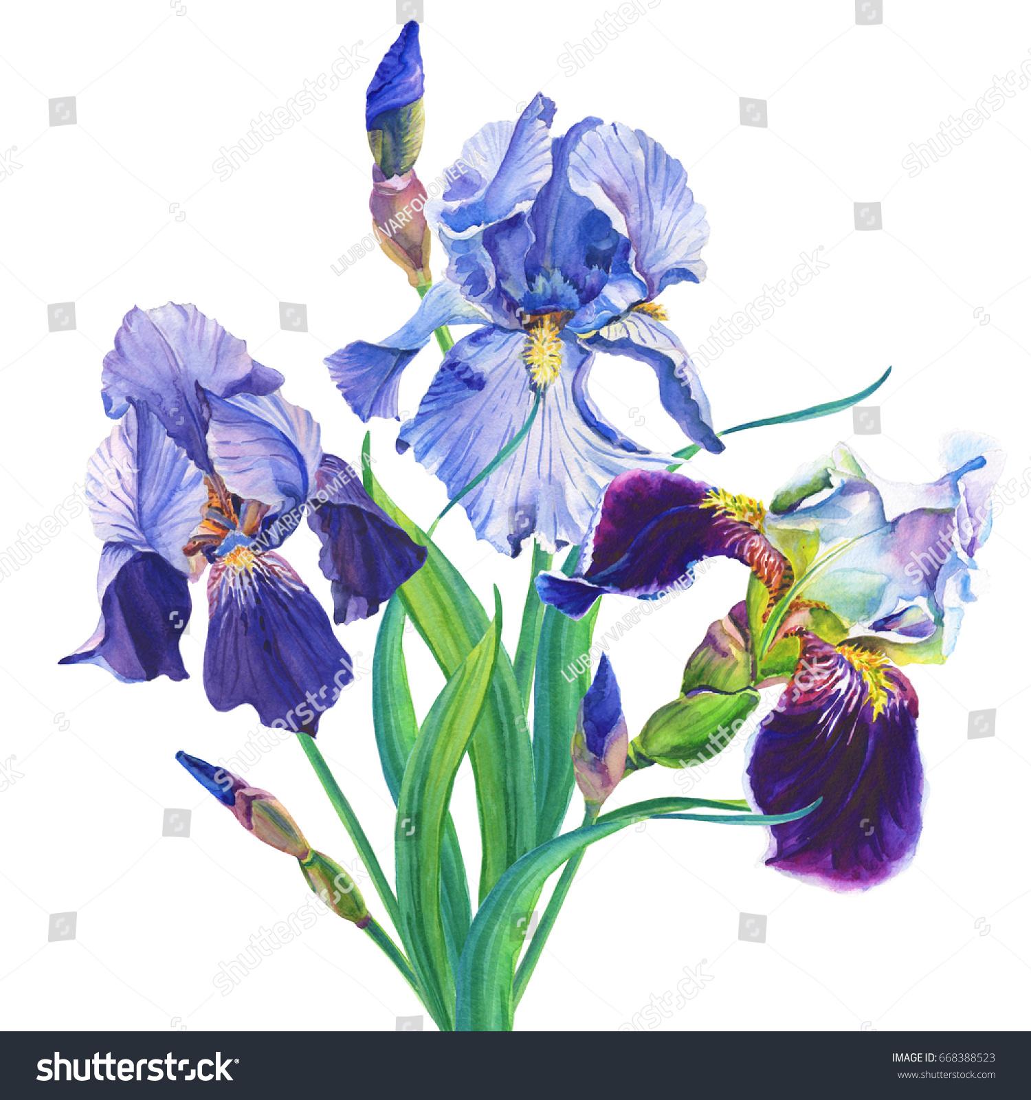 Blue iris flowers isolated on white background ez canvas izmirmasajfo
