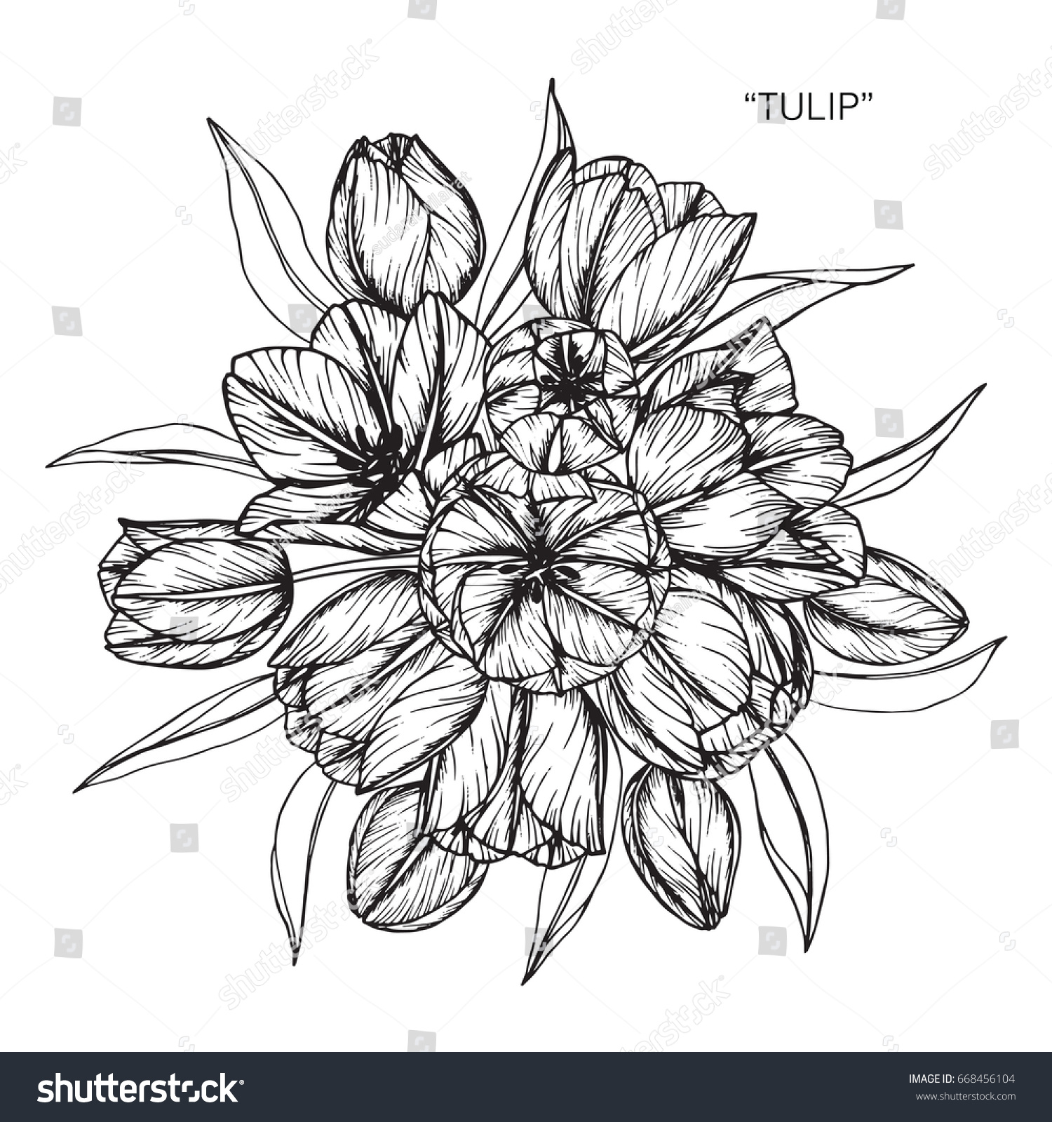 Bouquet Tulip Flowers Drawing Sketch Lineart Stock Vector Royalty