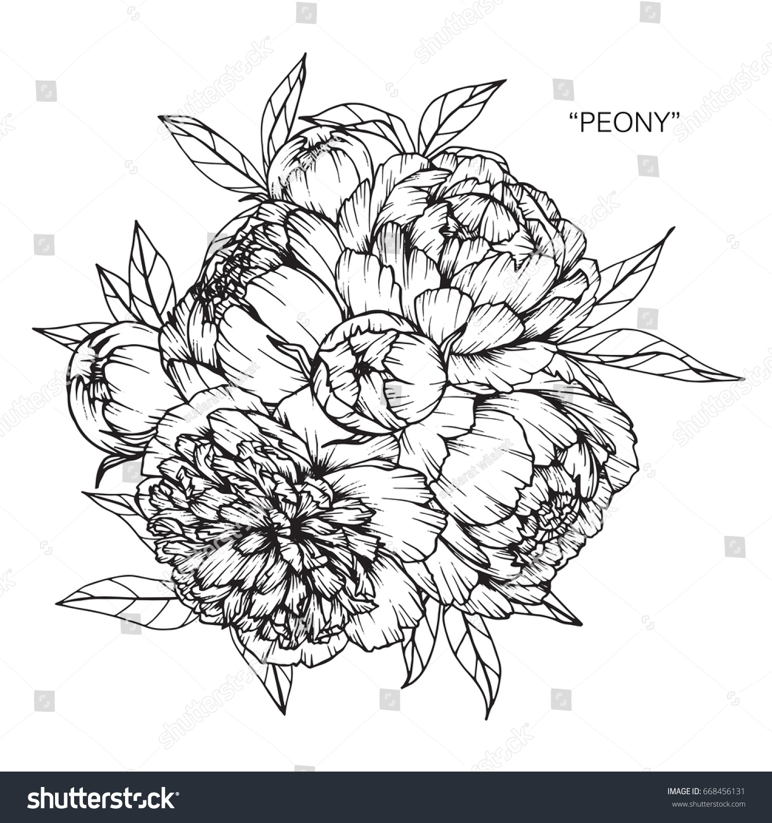 Bouquet Peony Flowers Drawing Sketch Lineart Stock Vector Royalty