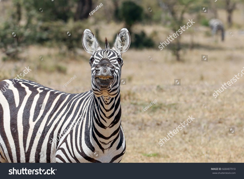 stock-photo-a-grants-plains-zebra-posing