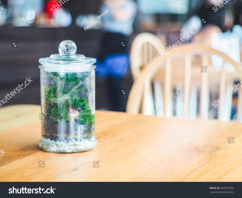 Terrarium On Wooden Table Coffee Shop Stock Photo Edit Now 668507392