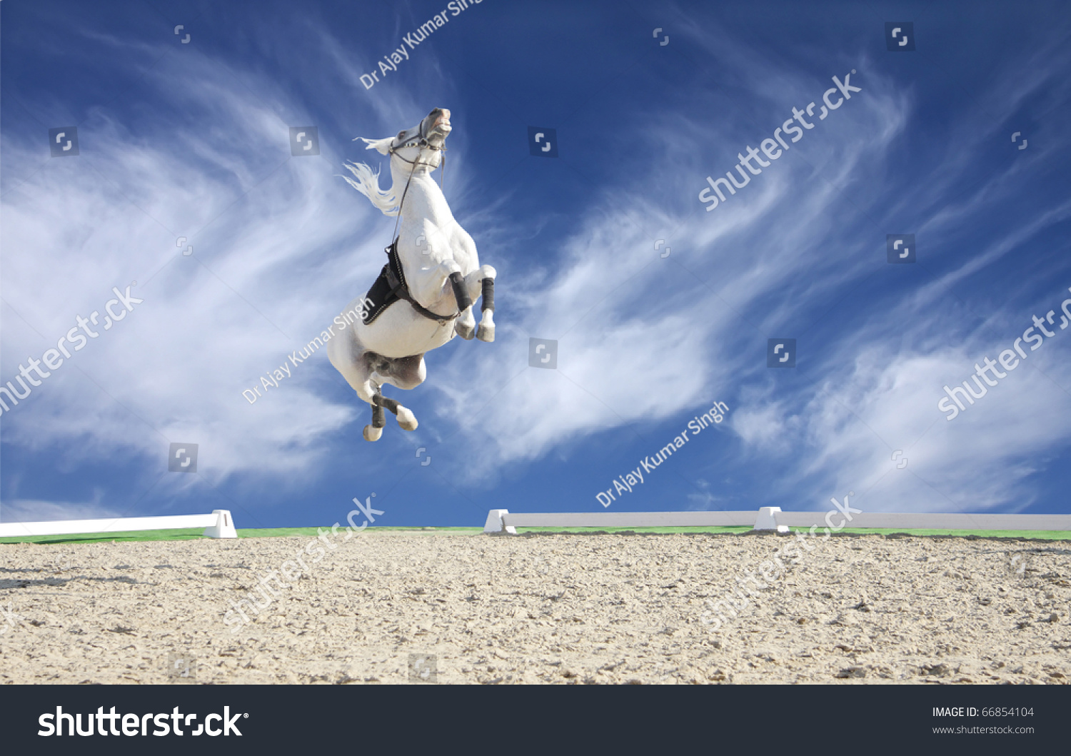 A Beautiful White Horse Jumping High In The Sky Stock ...