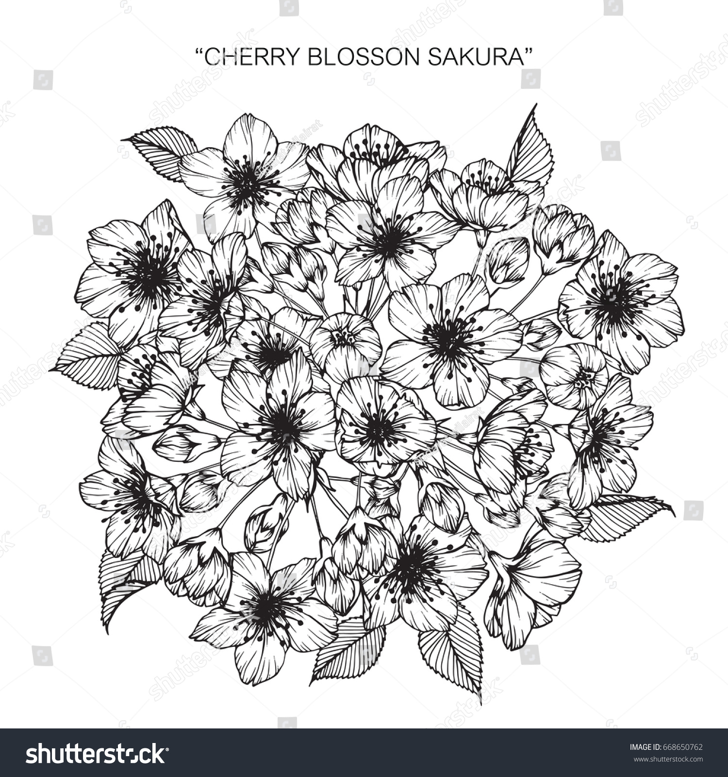 Bouquet cherry blossom flowers drawing sketch stock vector hd bouquet of cherry blossom flowers drawing and sketch with line art on white backgrounds izmirmasajfo