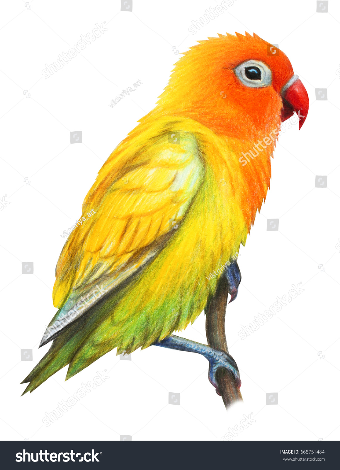 yellow realistic african parrot drawing stock illustration
