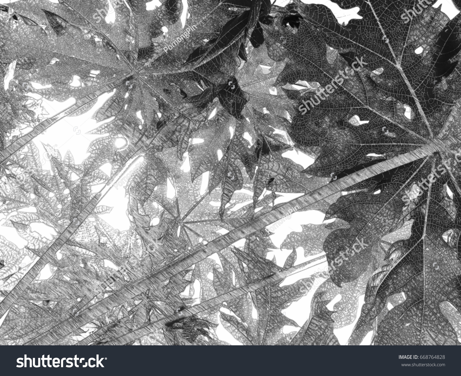 Papaya leaves and light background pencil drawings style mono tone