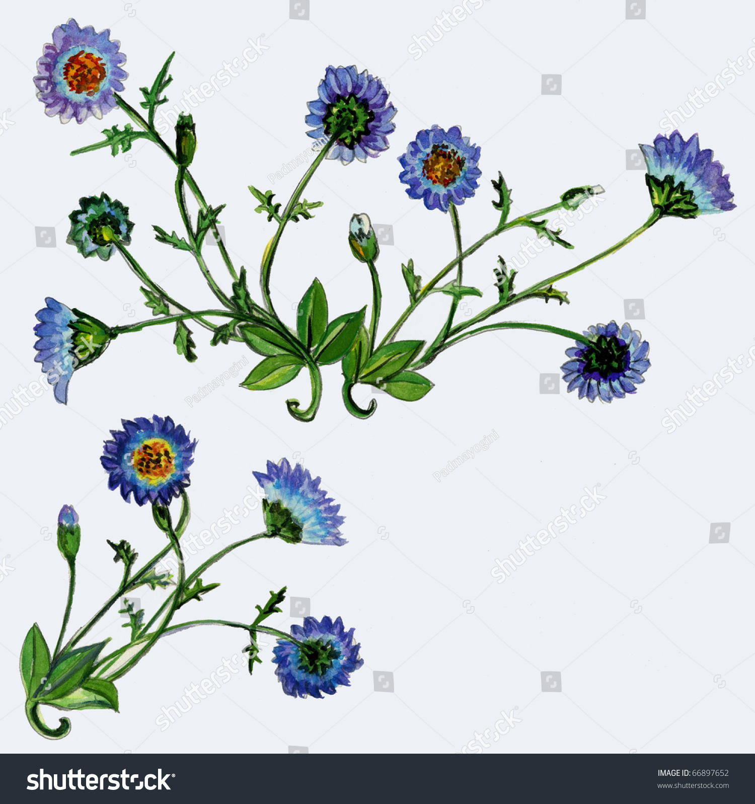 Illustration Two Daisy Plants Blue White Stock Illustration 66897652
