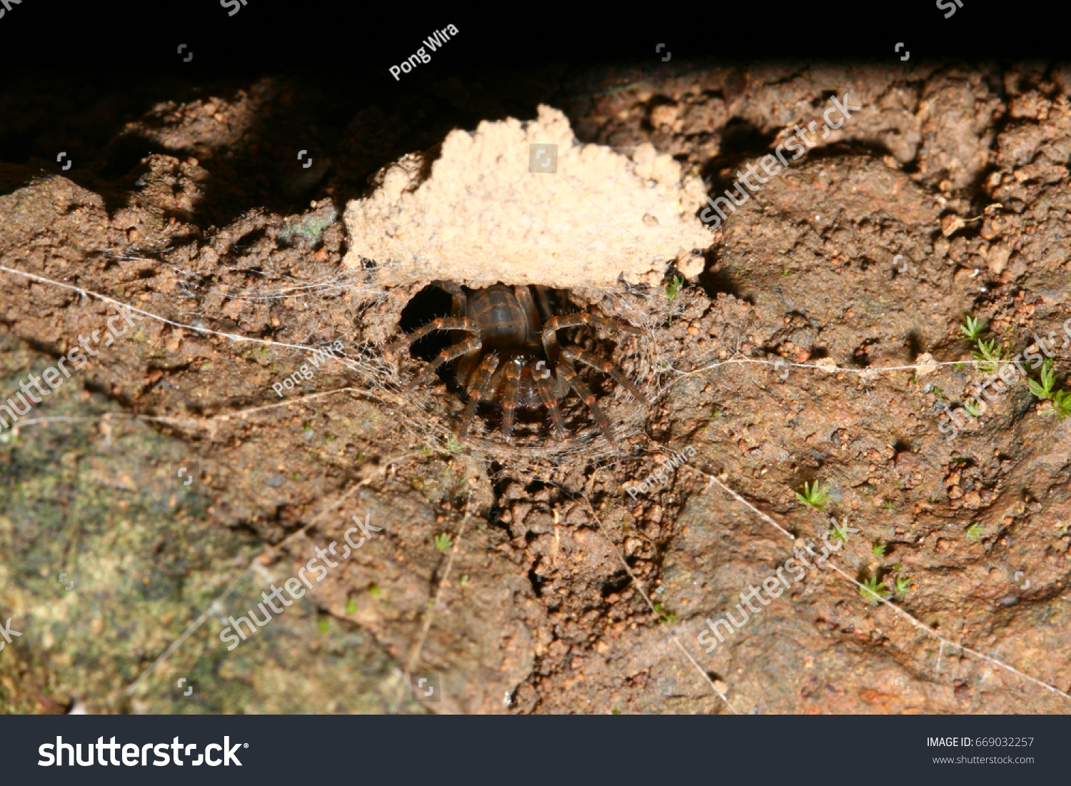 Trapdoor Spider Facts & Trapdoor Spiders Are Best Known For ...