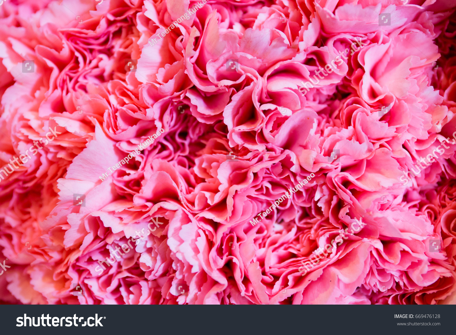 Pink Fake Flowers Background Texture Stock Photo 669476128