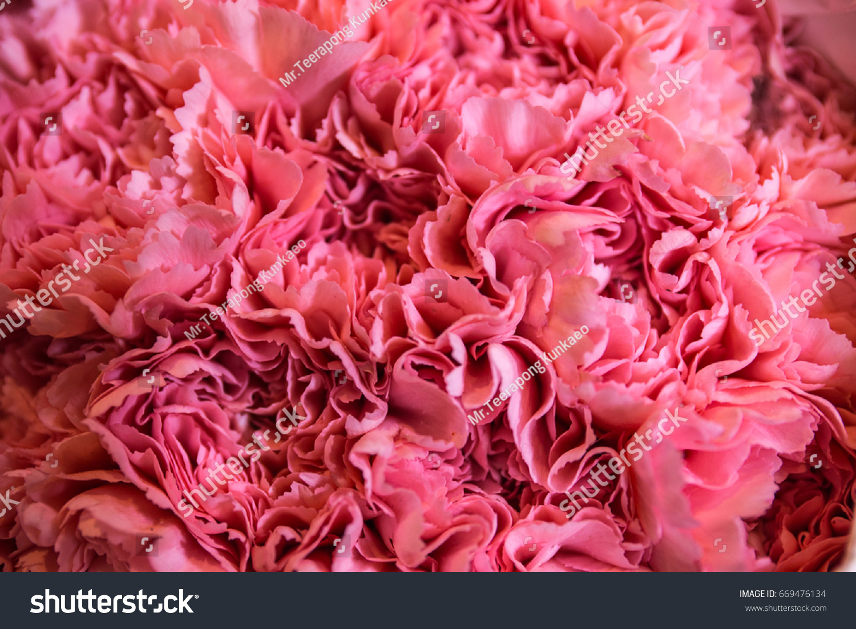 Pink Fake Flowers Background Texture Ez Canvas
