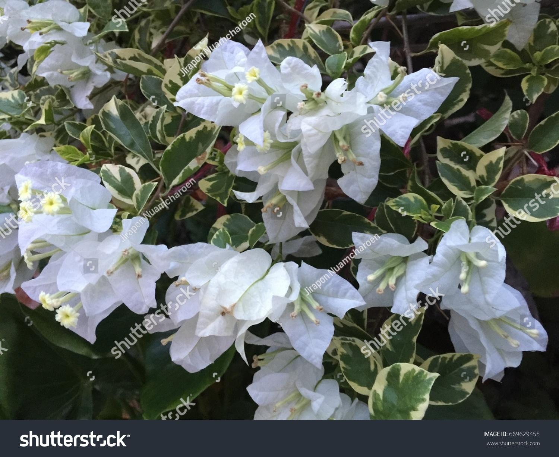 Flower At Botany Garden Ez Canvas