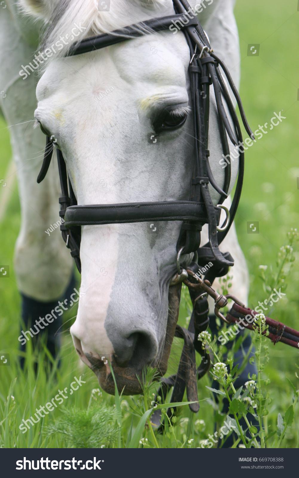 Head Cute White Horse Closeup Stock Photo Edit Now 669708388