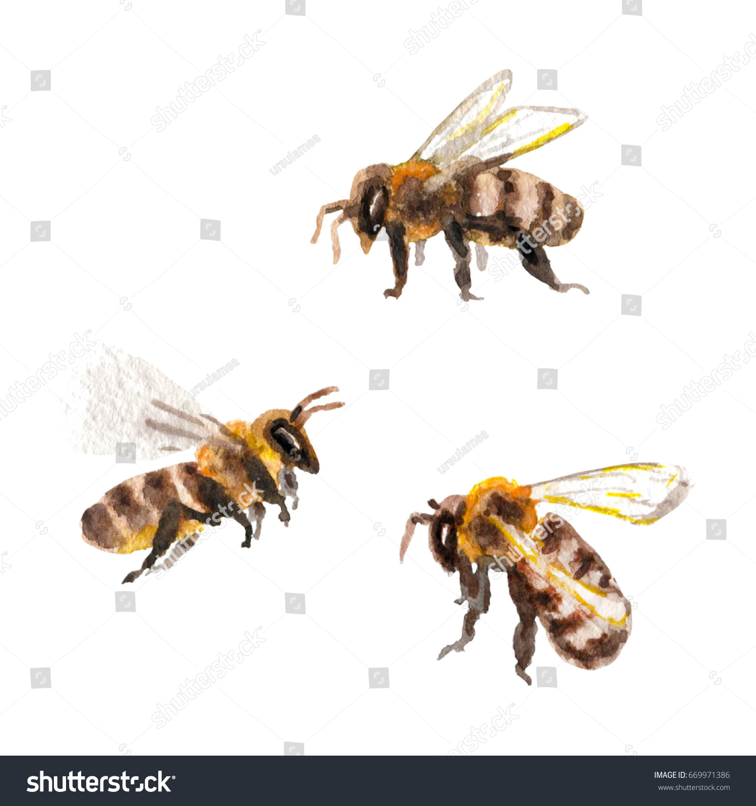Raster Realistic Watercolor Set Of Some Bees Isolated On White Animal And Biological Themes