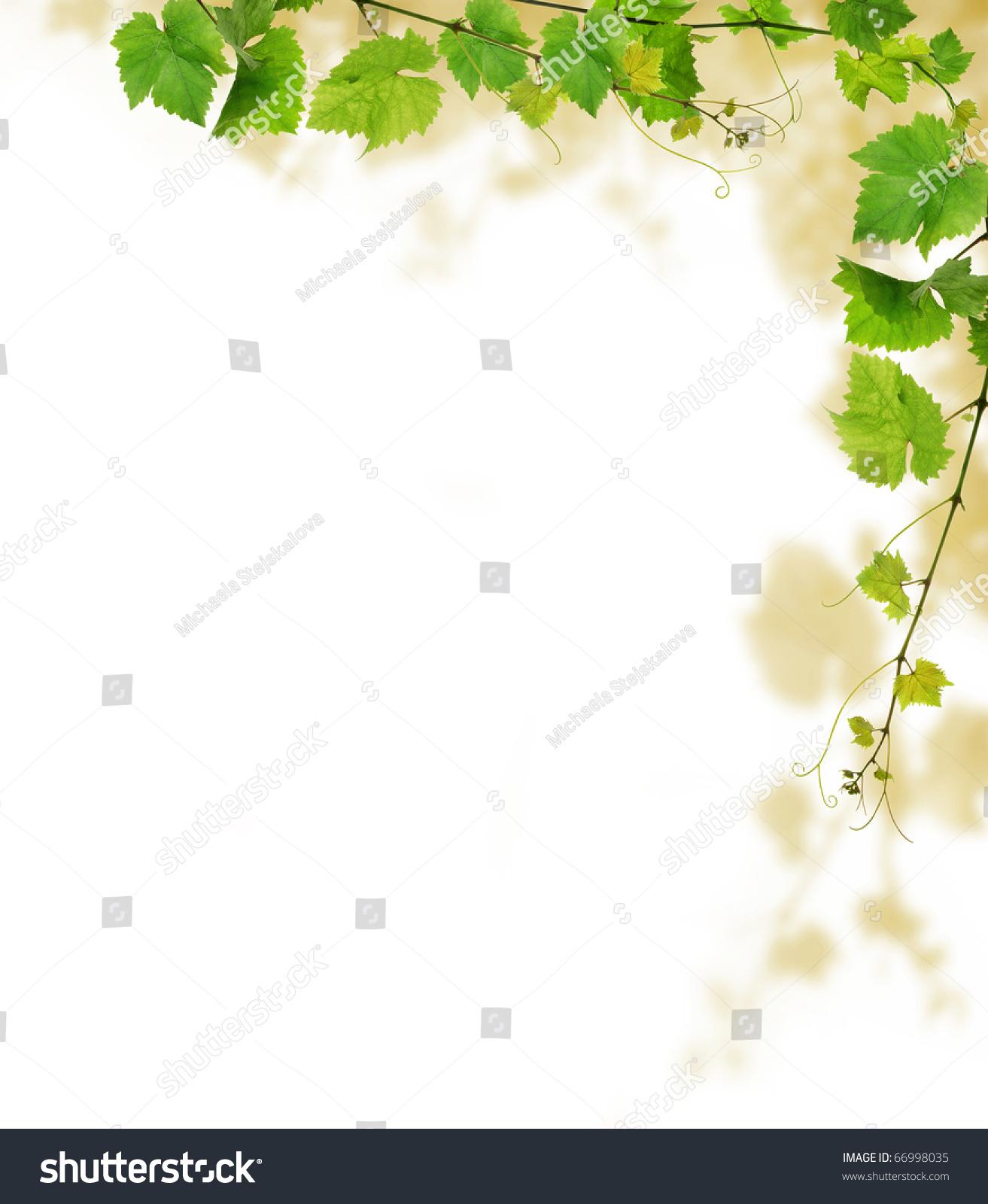 grapevine border design on white background stock photo