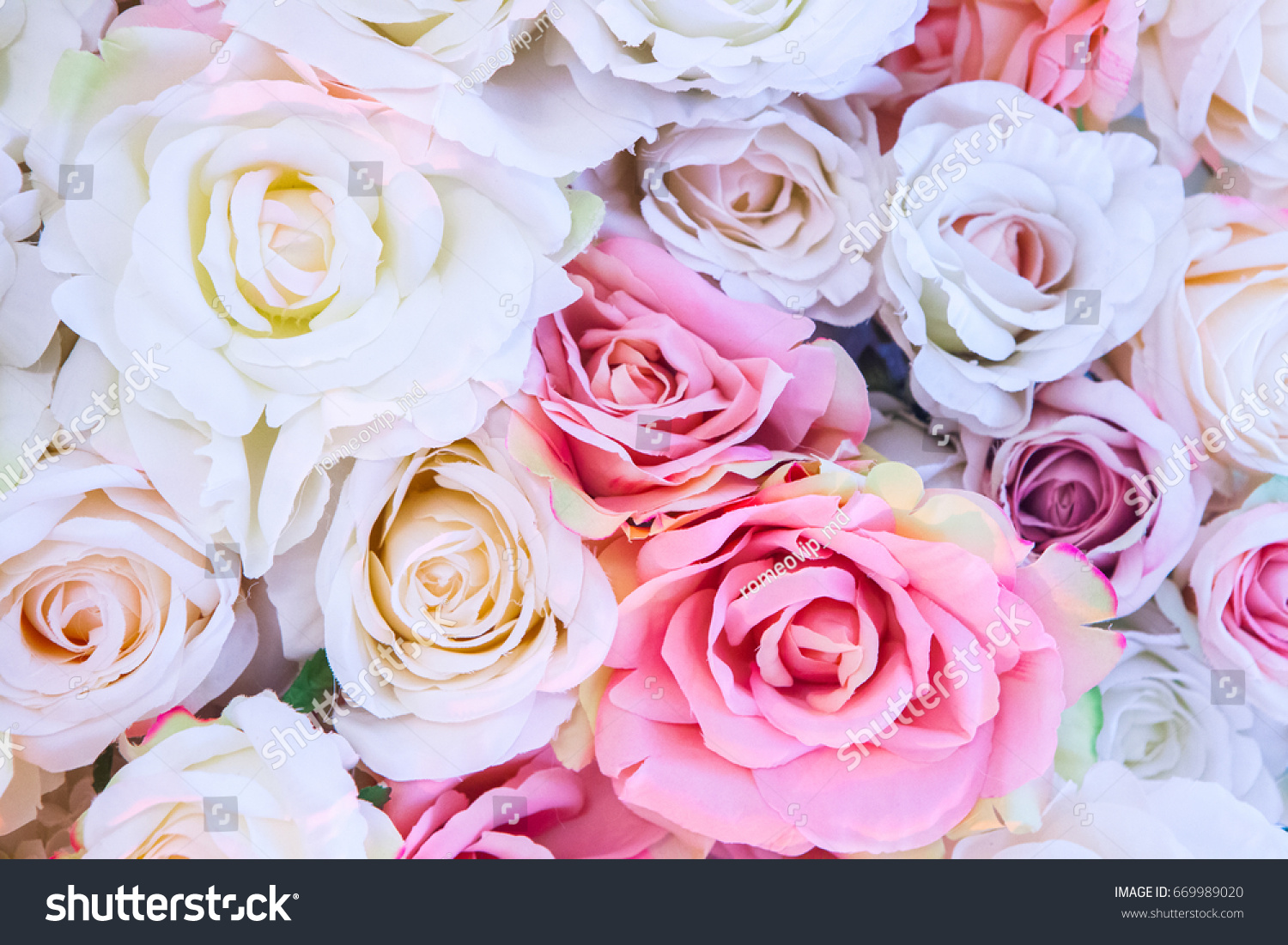 Background of pink orange and peach roses. Beautiful flowers ...